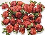 フルーツなかやま 栃木産 とちおとめ いちご 4パック入 糖度10度以上 1粒18g以上