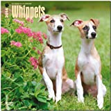 BrownTrout Whippets 2014 Wall
