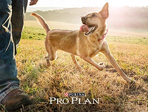 Purina Pro Plan Dog Food Serving Size
