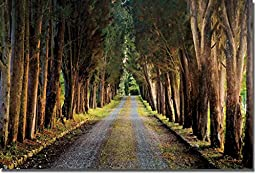 Tree Tunnel by Michael Cahill Custom Gallery-Wrapped Canvas Giclee (Ready to Hang)