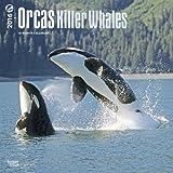 Orcas, Killer Whales 2016 Calendar