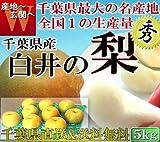 千葉県 白井 梨 あきづき種 大玉限定 5kg 秀品 贈答用
