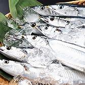 脂たっぷり!鮮度抜群!道東の新鮮秋刀魚(サンマ)約2kg(11尾~13尾前後)