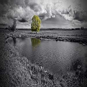 Amazon.com: BLACK AND WHITE LANDSCAPE WITH GREEN COLOR POP