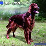 Avonside Publishing Irish Setter 2014 (Calendar 2014)