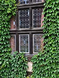 selbstklimmende jungfernrebe wilder wein 9cm topf 3 pflanzen garten. Black Bedroom Furniture Sets. Home Design Ideas