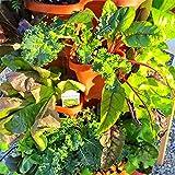 Mr. Stacky 5-Tier Strawberry Planter Pot, 5 Pots (Color: Terracotta Orange, Tamaño: 1-(Pack))