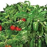 Miracle-Gro AeroGarden Salsa Garden Seed Pod Kit (7-Pods)