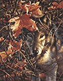 "Autumn Wolf Paint By Number Kit 11""X14"" 91362"