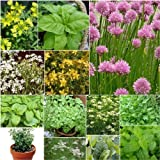 15 Packs Herb Seeds - Inc. Chives, Parsley, Mint and Balm