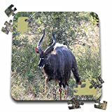 Angelique Cajam Safari Animals - South African Kudu in the grass - 10x10 Inch Puzzle (pzl_20132_2)