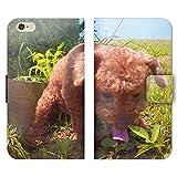 iPhone6s Plus 5.5 iPhone6sPlus 手帳型 くまお (P002202_02) 犬 トイプードル イヌ 動物 ブサかわ スマホケース アイフォン 各社共通