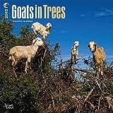 Goats in Trees 2015 Wall Calendar