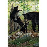 Family of Black Bears Garden Flag Cubs Woods Wildlife Everyday 12.5