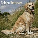 Golden Retriever Calendar - Just Gold...