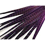 Maslin New! Selling 50 Purple Beautiful Pheasant Feathers Natural Colors Long 50-55cm 20-22inch Various Size Props Decorations - (Color: 40-45cm 50pc) (Color: 40-45cm 50pc)