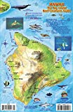 Hawaii The Big Island Map & Reef Creatures Guide Franko Maps Laminated Fish Card