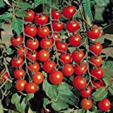 Go Green Tomato Cherry - 2 Packets each 50 Seeds