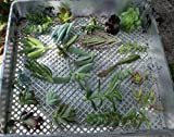 25 (25 varieties) Succulent CUTTINGS great for Vertical Gardens & wreaths & topiaries