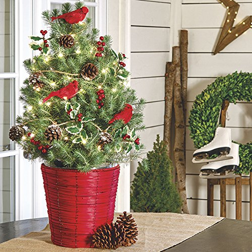 jackson-perkins-balsam-and-berry-christmas-tree-in-red-wicker-basket-container-italian-stone-pine-tr