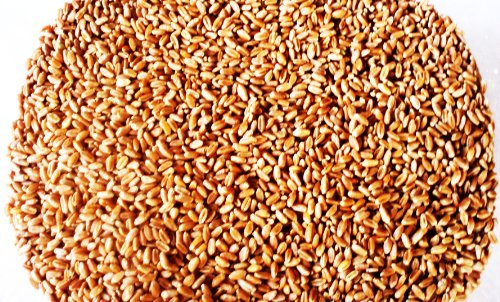 Hard Red Wheat, 5 Lbs  Excellent For Growing