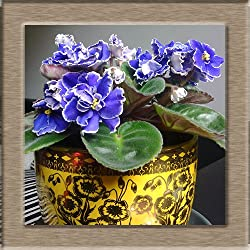 50seeds/bag All sorts of color violet seed orchard perennial herb Matthiola Incana Best Little Garden home bonsai