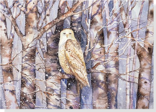 Snowy Owl Holiday Boxed Cards (Christmas Cards, Holiday Cards, Greeting Cards)