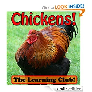 Chickens! Learn About Chickens And Learn To Read - The Learning Club! (45+ Photos of Chickens)