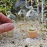 Miniature Fairy Garden Glass Cloches, Set of 5