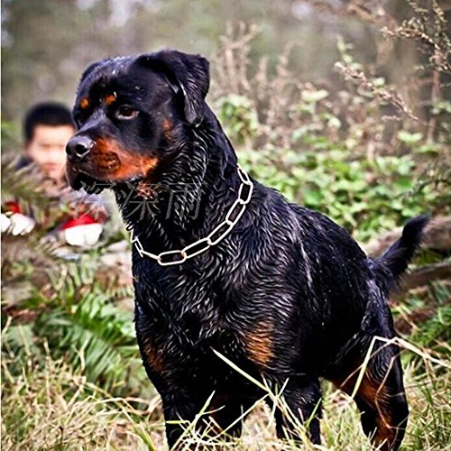 Jpettie-New-Style-Adjustable-Training-Dog-Collar-Snake-Chain-Stainless-Steel-P-chain-Pet-Collar-L