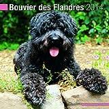 Bouvier des Flandres 2014