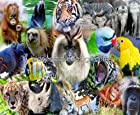 1/4 ~ Zoo Animals Colorful Collage Birthday ~ Edible Image Cake/Cupcake Topper!!!