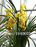 ビッグセールの100pcs /バッグシンビジウム蘭、黄色のシンビジウム、シンビジュームの蘭の植物、盆栽の花の種、自然成長、ホームグラムのための植物