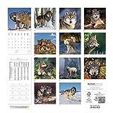 Image de Alpha Edition 16.0108 Lupi Calendario da Muro 2016, 30 X 60 cm Aperto