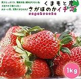 熊本産イチゴ(さがほのか)1キロ
