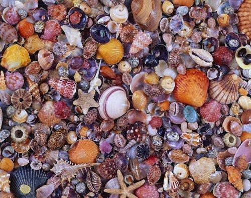 Sea Shells, 1000 Piece Puzzle