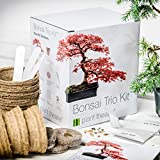 Lawn & Patio - Plant Theatre Bonsai-Trio Kit - 3 unverwechselbare Bonsai-B�ume