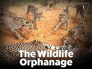 The Wildlife Orphanage Season 1 Episode 3