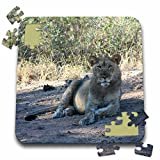 Angelique Cajam Big Cat Safari - Young lion in the grass - 10x10 Inch Puzzle (pzl_26832_2)