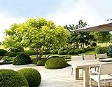 Image de Design mit Pflanzen - Moderne Architektur im Garten (Garten- und Ideenbücher BJVV)