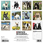 2016 Just French Bulldogs Wall Calendar by Willow Creek Calendars