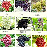 Mixed 30 Seeds/pack Grape Fruit Seed Seed Fruit Tree Seedlings Potted Seedlings Kyoho Grape Seed Red Mention Child