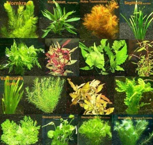 150-Wasserpflanzen-XXL-Set-Dnger-Aufbereiter
