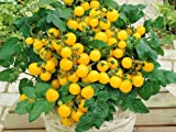 Lawn & Patio - Balkontomate - Buschtomate - gelbe Cherry - Windowbox yellow - 20 Samen