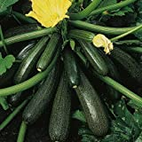 COURGETTE - AMBASSADOR F1 - 20 FINEST SEEDS