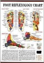Foot Reflexology Chart Laminated