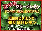 宮崎県 グリーンレモン マイヤー 『ワケあり商品』【キズアリ】 およそ45個 およそ5kg入り