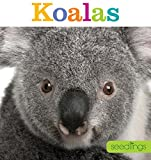 Seedlings: Koalas