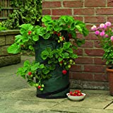 Gardman 7510 Strawberry Pop Up Planter, Green