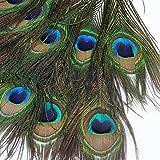 10本セット 装飾用の羽根 孔雀の羽 23-30cm アクセサリー 羽根・手芸材料・パーツ【帽子の飾りやインテリアにも】